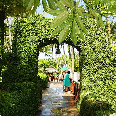 Caribbean foliage, arch hedge